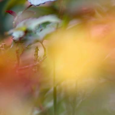 Dhyana Fritsche - https://artsinthetawevalley.com/dhyana-fritsche-photography/
