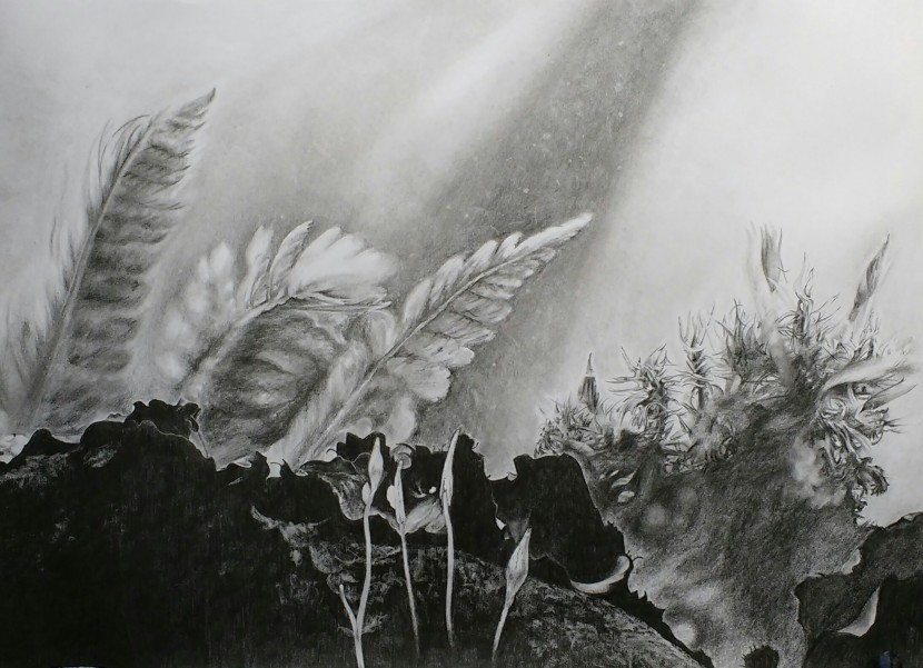 Jess Young, pencil drawings